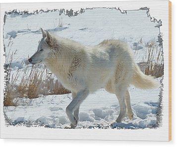 Lone White Wolf Wood Print
