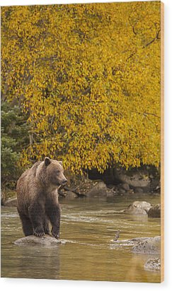 Looking For An Autumn Meal Wood Print by Tim Grams
