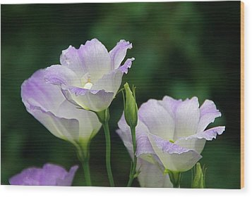 Wood Print featuring the photograph Lovely Lisianthus by Byron Varvarigos