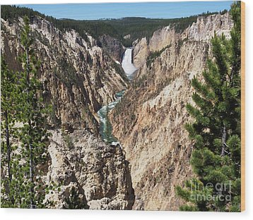 Lower Falls From Artist Point In Yellowstone National Park Wood Print by Louise Heusinkveld