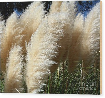 Wood Print featuring the photograph Majestic Pampas Grass by Merton Allen