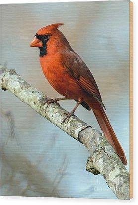 Male Cardinal Wood Print by Debbie Green