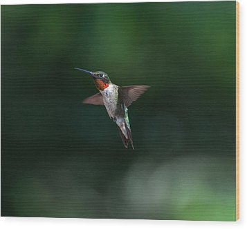 Male Ruby Throated Hummingbird Wood Print by Brenda Jacobs