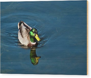 Mallard Wood Print by Bill Barber