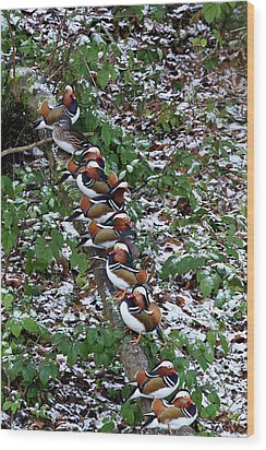 Mandarin Ducks Wood Print