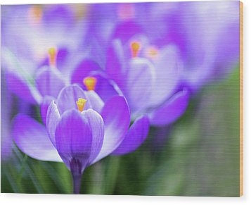 Wood Print featuring the photograph Marching Into Spring by Rebecca Cozart