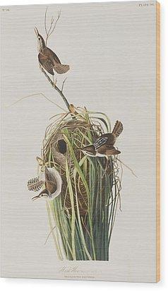 Marsh Wren  Wood Print by John James Audubon