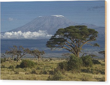 Mount Kilimanjaro Wood Print by Michele Burgess