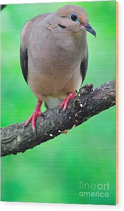 Mourning Dove Wood Print by Thomas R Fletcher