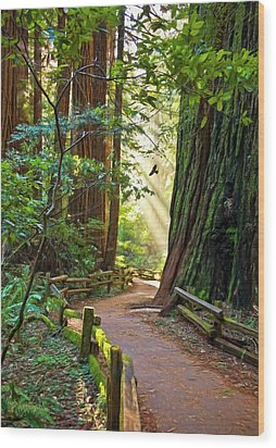 Muir Woods Wood Print by Patricia Stalter