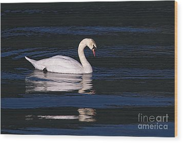 Wood Print featuring the photograph Mute Swan  by Sharon Talson