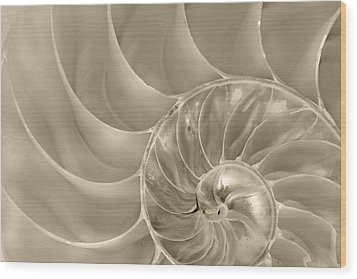 Wood Print featuring the photograph Nautilus Shell by John Hix