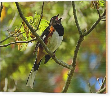 Towhee In Song Wood Print