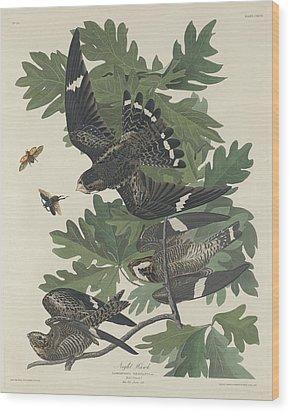 Night Hawk Wood Print by Anton Oreshkin