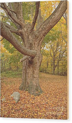 Odiorne Point State Park - Rye New Hampshire Wood Print by Erin Paul Donovan