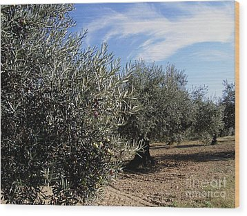 Olive Trees Wood Print by Judy Kirouac