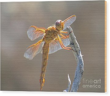 Dragonfly 5 Wood Print