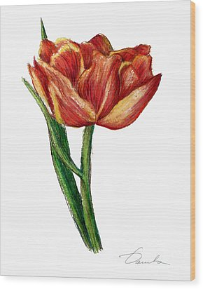 Orange Tulip Wood Print by Danuta Bennett