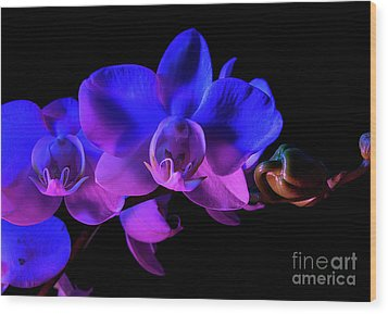 Orchid Wood Print by Brian Jones