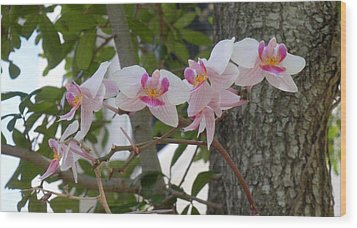Orchid Bunch Wood Print by Maria Bonnier-Perez
