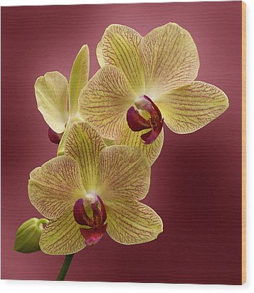 Orchid Wood Print by Sandy Keeton