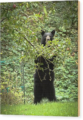 Wood Print featuring the photograph Our Bear Loves Apples by Ronda Broatch