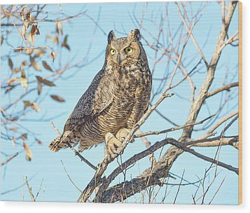 Owlish Wood Print