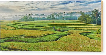 Paddy Rice Panorama Wood Print by MotHaiBaPhoto Prints