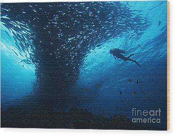 Palau, Diving Wood Print by Dave Fleetham - Printscapes