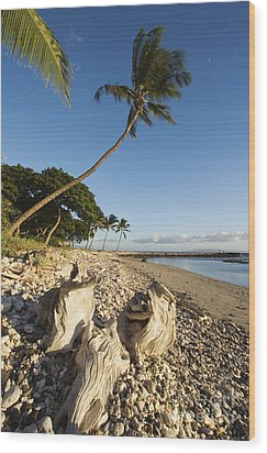 Palm And Driftwood Wood Print by Ron Dahlquist - Printscapes