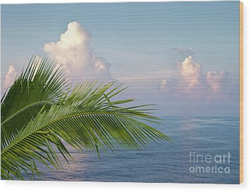 Palm And Ocean Wood Print by Blink Images
