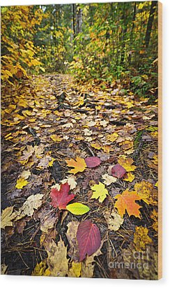 Path In Fall Forest Wood Print by Elena Elisseeva