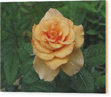 Wood Print featuring the photograph Peace Rose by Erik Falkensteen