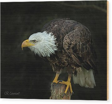 Perched Bald Eagle Wood Print by CR Courson