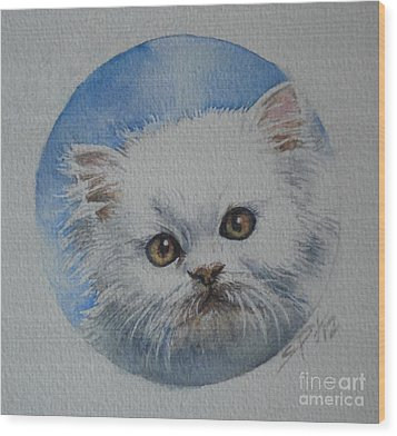 Persian Kitten Wood Print
