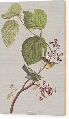 Pine Swamp Warbler Wood Print by John James Audubon