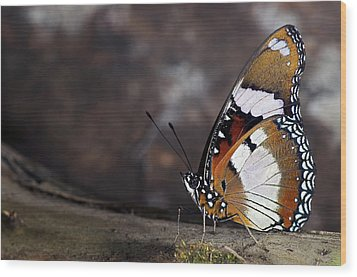 Plain Tiger Butterfly Wood Print by JT Lewis