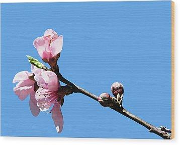 Plum Blossoms Wood Print by Kristin Elmquist