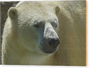 Wood Print featuring the photograph Polar Bear by JT Lewis