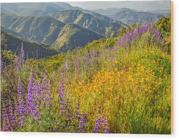 Poppies And Lupine Wood Print