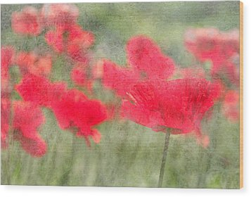 Poppies Wood Print by Catherine Alfidi
