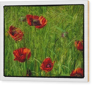 Poppies Wood Print by Hugh Smith