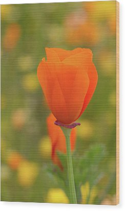 Wood Print featuring the photograph Poppy by Roger Mullenhour
