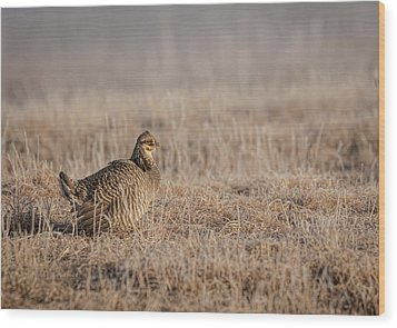 Wood Print featuring the photograph Prairie Chicken 8-2015 by Thomas Young