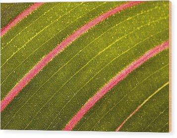 Wood Print featuring the photograph Prayer Plant Maranta Leuconeura by Gabor Pozsgai