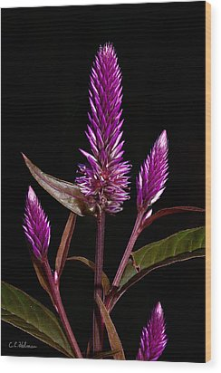 Purple Wood Print by Christopher Holmes