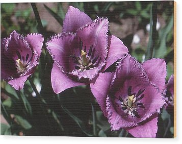 Purple Flowers Two  Wood Print by Lyle Crump