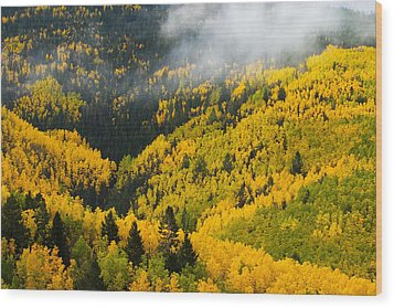 Quaking Aspen And Ponderosa Pine Trees Wood Print by Ralph Lee Hopkins