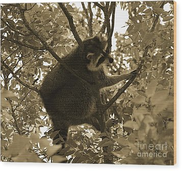 Raccoon  Wood Print by Janice Spivey