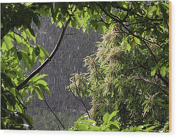 Wood Print featuring the photograph Rain by Bruno Spagnolo